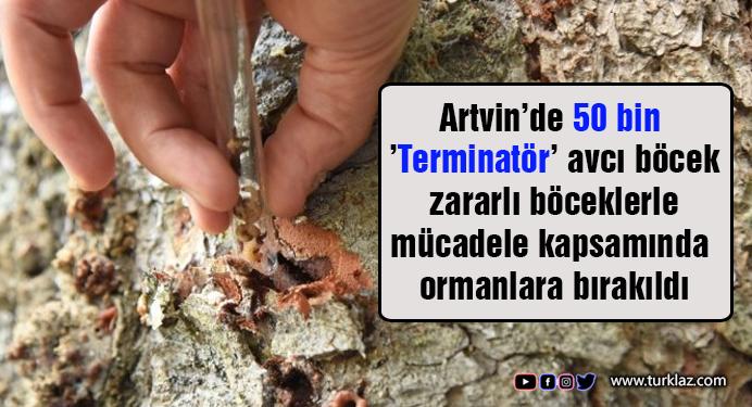 Artvin'de 50 bin 'Terminatör' avcı böcek ormanlara bırakıldı