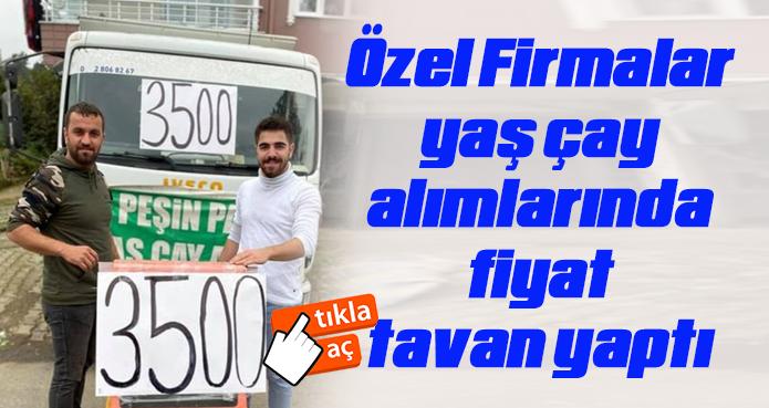 AYTEMİZ ÇAY'DA 1 KG YAŞÇAY FİYATI 3500