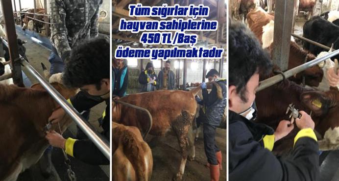 Hayvan sahiplerine 450 TL /Baş ödeme yapılmaktadır