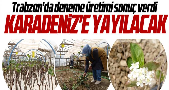 Karadeniz'e yeni ürün süper meyve denemelerden geçer not aldı