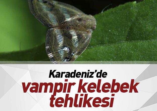 YİNE VAMPİR KELEBEK