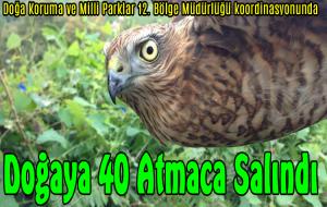 40 ATMACA TABİATA BIRAKILDI