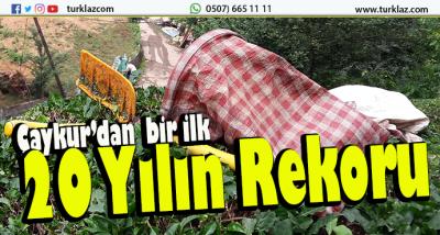 ÇAYKUR'DAN REKOR ALIM