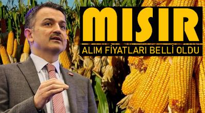 MISIR ALIM FİYATLARI BELLİ OLDU