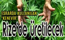 RİZE'DE 'KENEVİR' ÜRETİLECEK