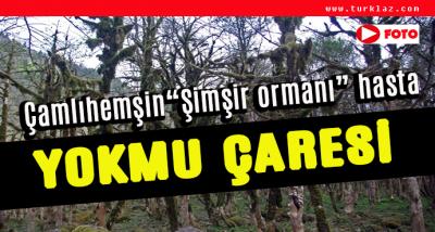 ŞİMSİR ORMANI HASTA